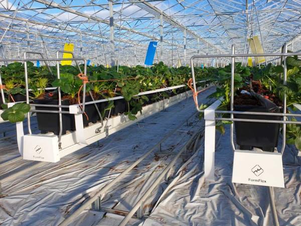 Medlar Fruit Farm Crop support