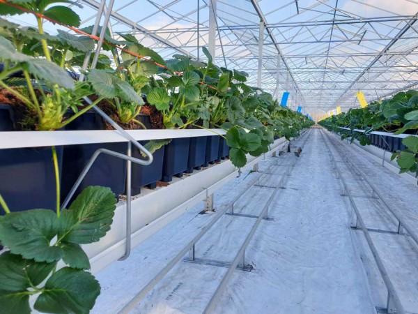 Medlar Fruit Farm Gutter system