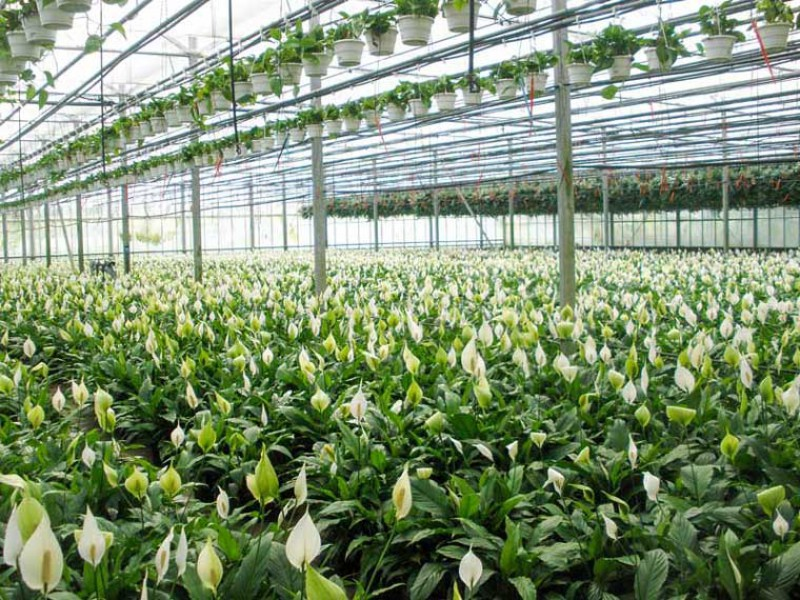 Metazet-FormFlex/Products-and-systems/Hanging-Basket-system/Hanging-Basket-System-2.jpg